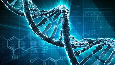 Maladies rénales d'origine génétique